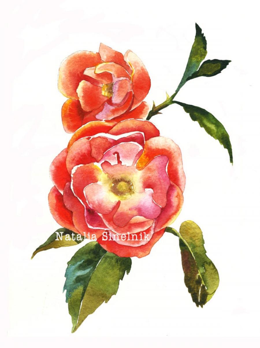 Dog rose twig